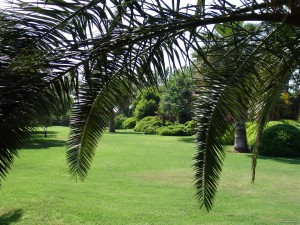 lawn under the palm trees