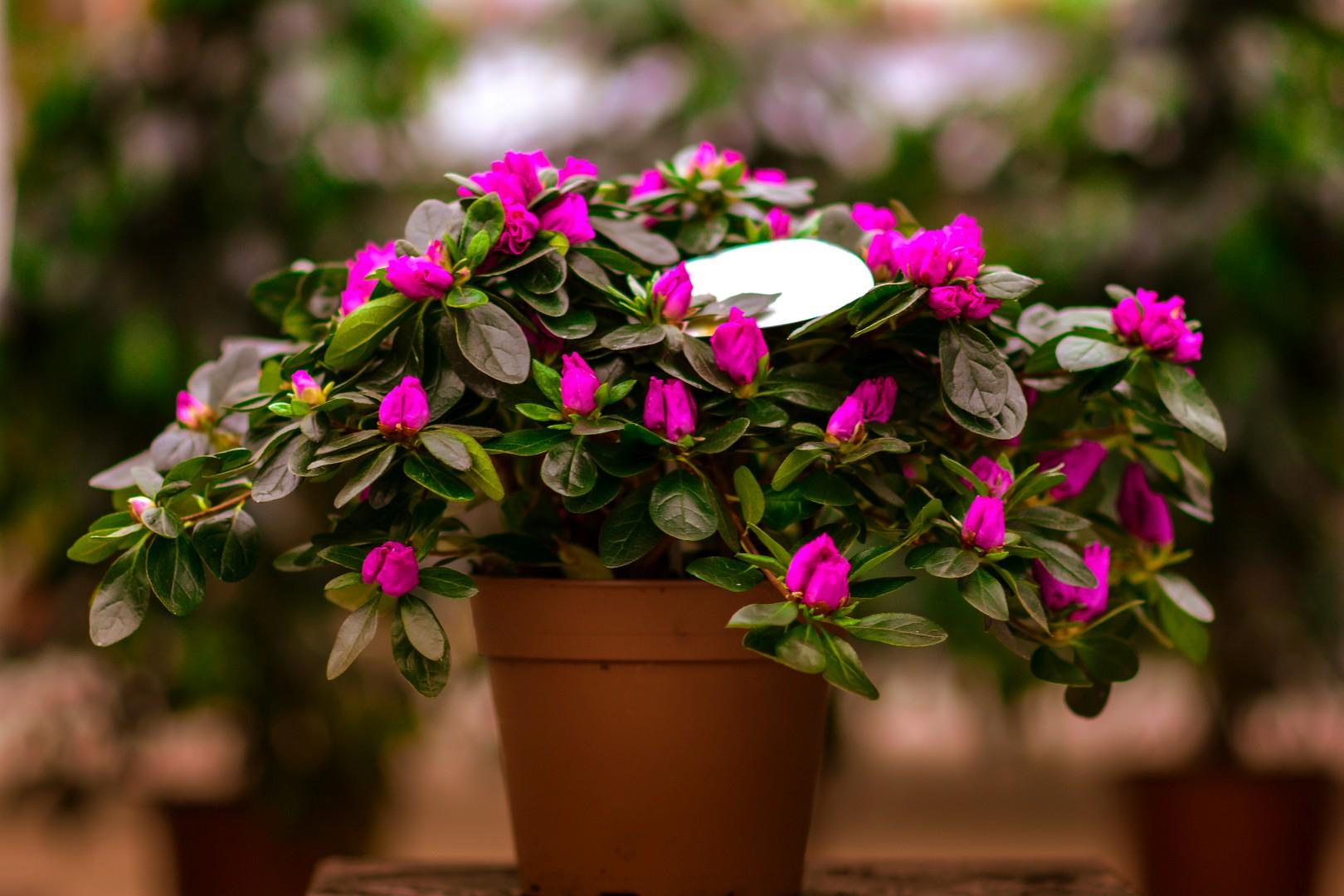 gardenshop-constanta.ro 001