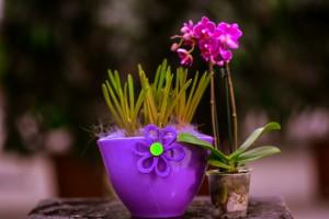 gardenshop-constanta.ro 002