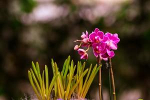 gardenshop-constanta.ro 003