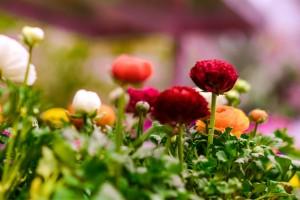 gardenshop-constanta.ro 005