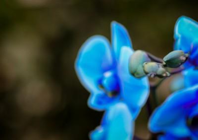 gardenshop-constanta.ro 006