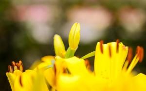 gardenshop-constanta.ro 010