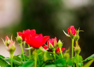 gardenshop-constanta.ro 011