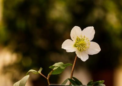 gardenshop-constanta.ro -s2 002