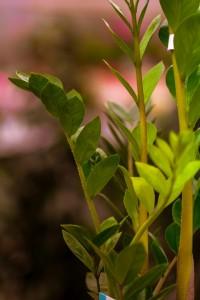 gardenshop-constanta.ro -s2 004