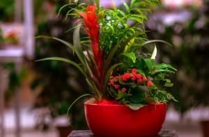 gardenshop-constanta.ro -s2 005