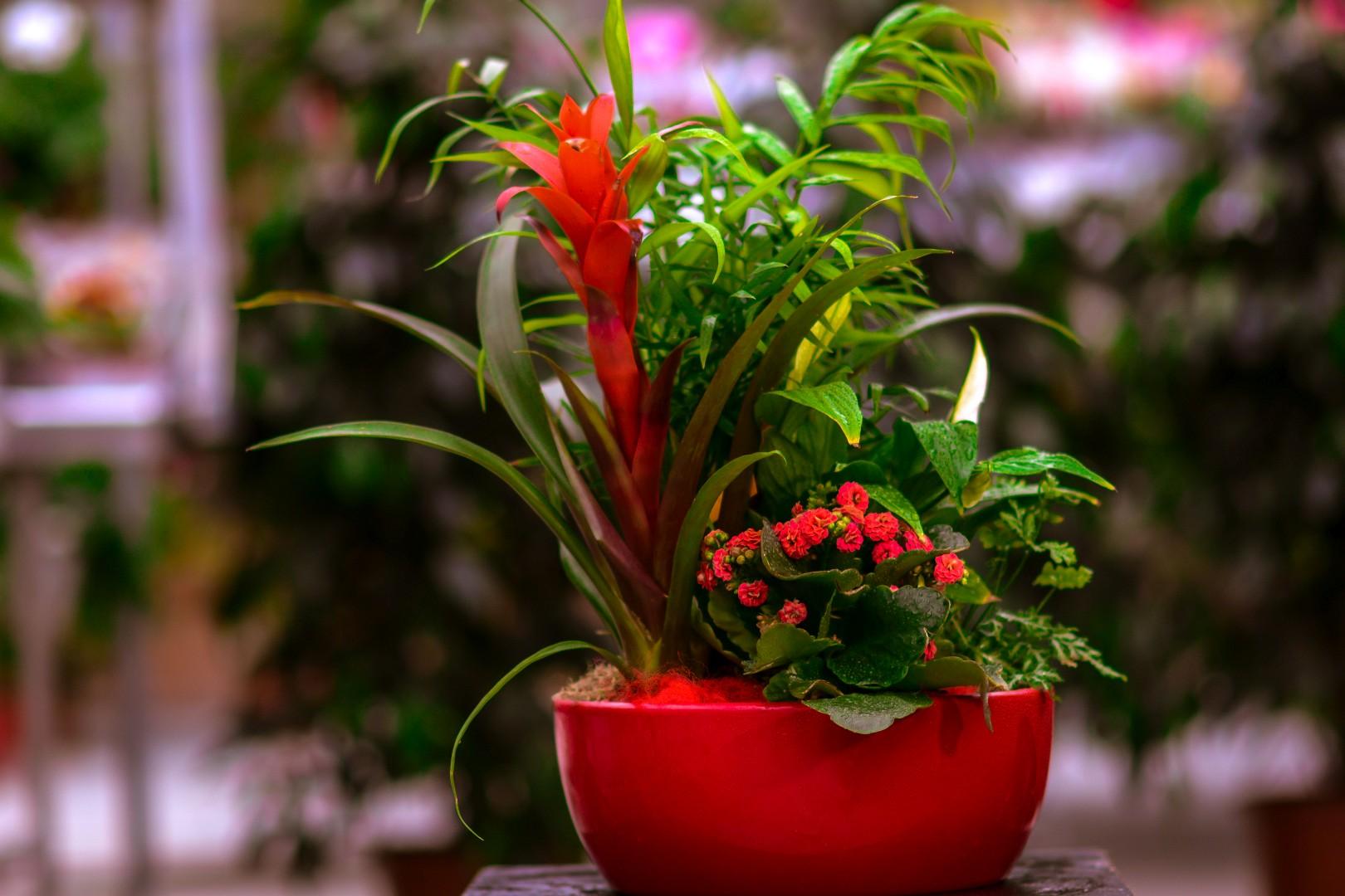 gardenshop-constanta.ro -s2 006