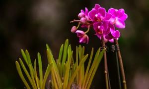 gardenshop-constanta.ro -s2 008