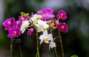 gardenshop-constanta.ro -s2 011