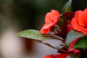 gardenshop-constanta.ro -s2 012