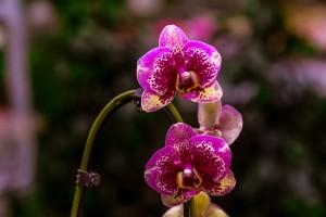 gardenshop-constanta.ro -s2 014
