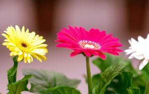 gardenshop-constanta.ro -s2 015