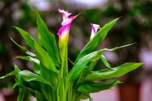 gardenshop-constanta.ro -s2 016