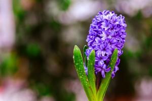 gardenshop-constanta.ro -s2 018