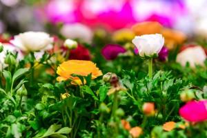 gardenshop-constanta.ro -s2 019