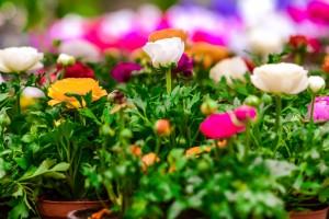 gardenshop-constanta.ro -s2 020