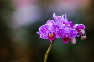 gardenshop-constanta.ro -s2 022