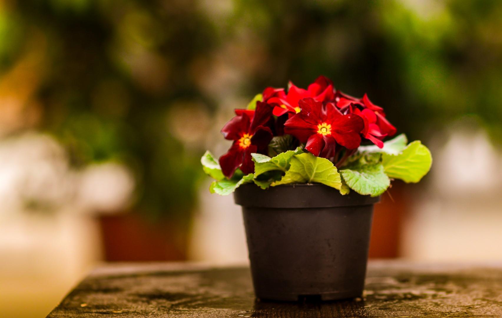 gardenshop-constanta.ro -s2 025