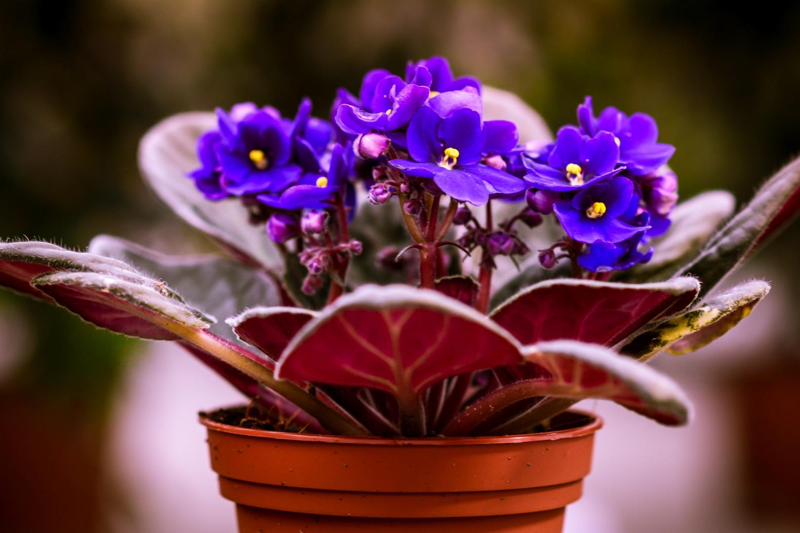 gardenshop-constanta.ro -s2 026