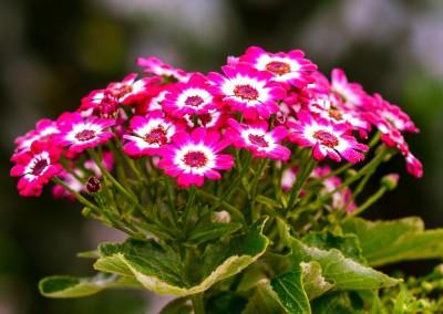 gardenshop-constanta.ro -s2 027
