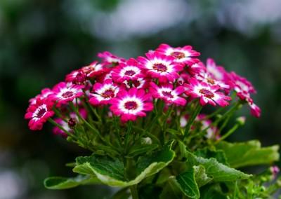 gardenshop-constanta.ro -s2 028