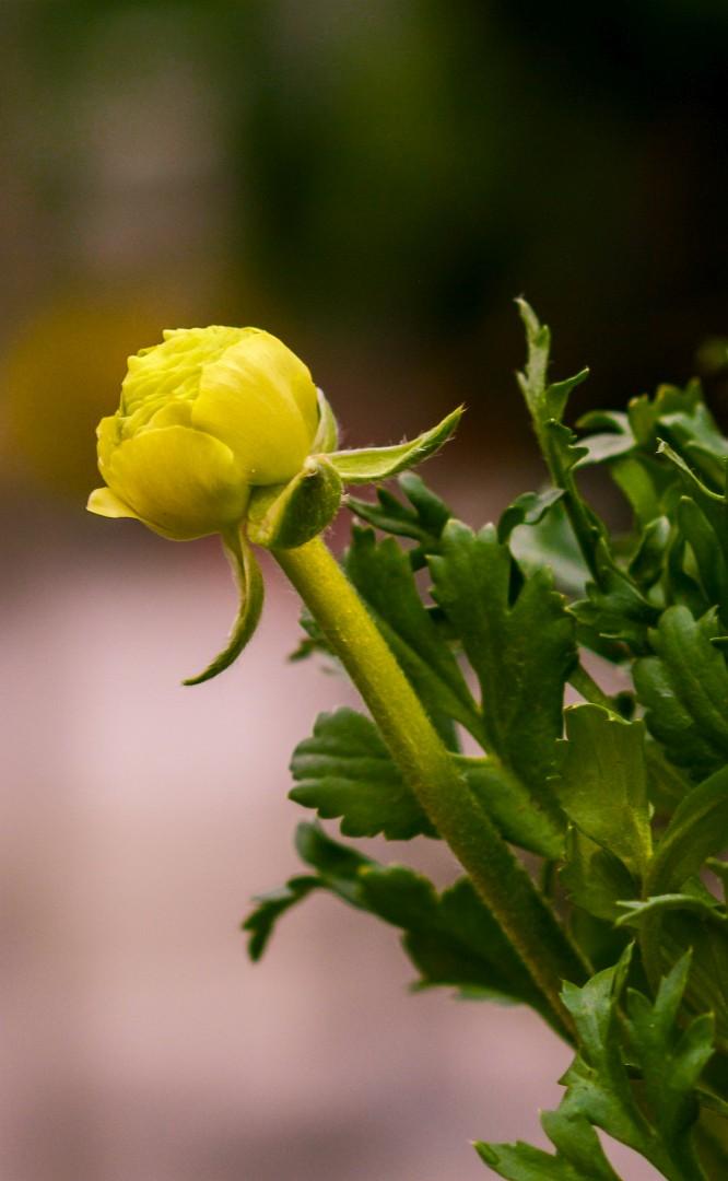 gardenshop-constanta.ro -s2 031