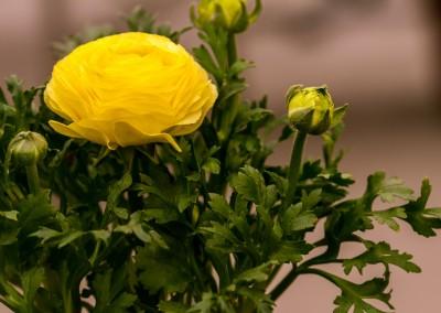 gardenshop-constanta.ro -s2 032