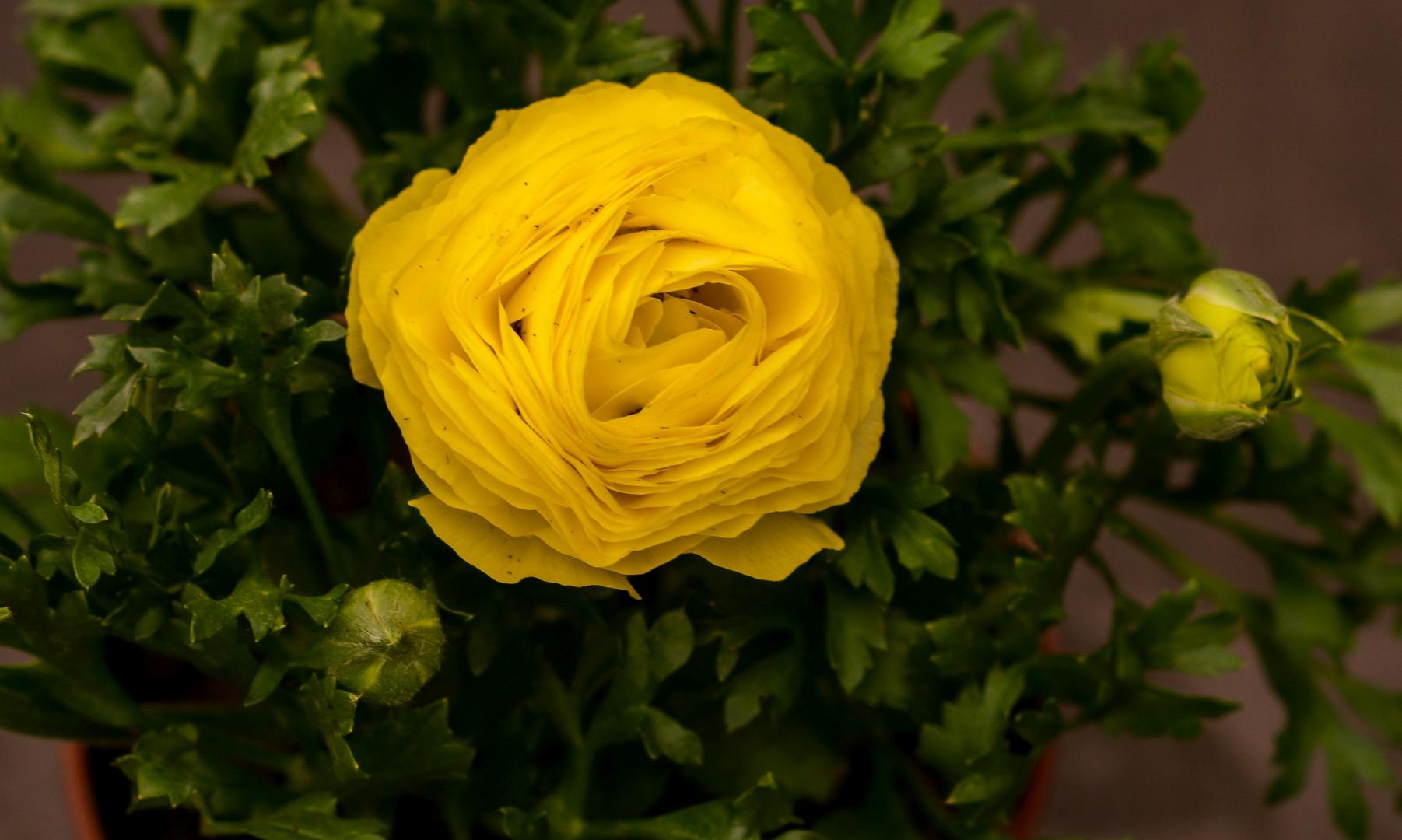 gardenshop-constanta.ro -s2 033