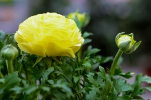 gardenshop-constanta.ro -s2 034