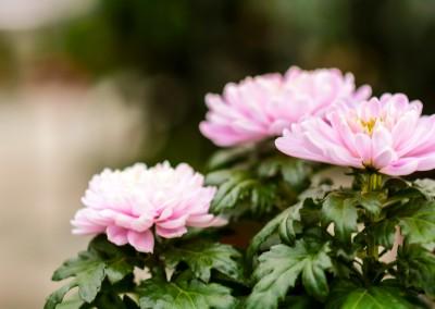 gardenshop-constanta.ro -s2 036