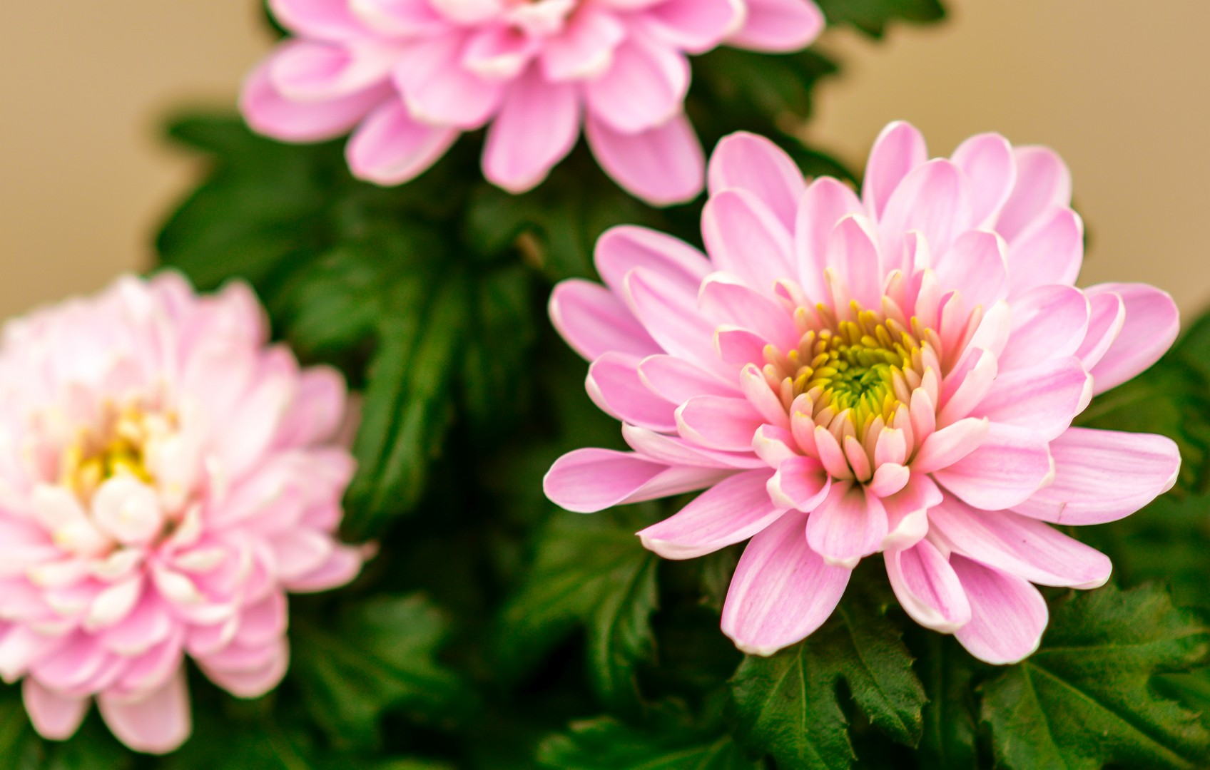 gardenshop-constanta.ro -s2 038