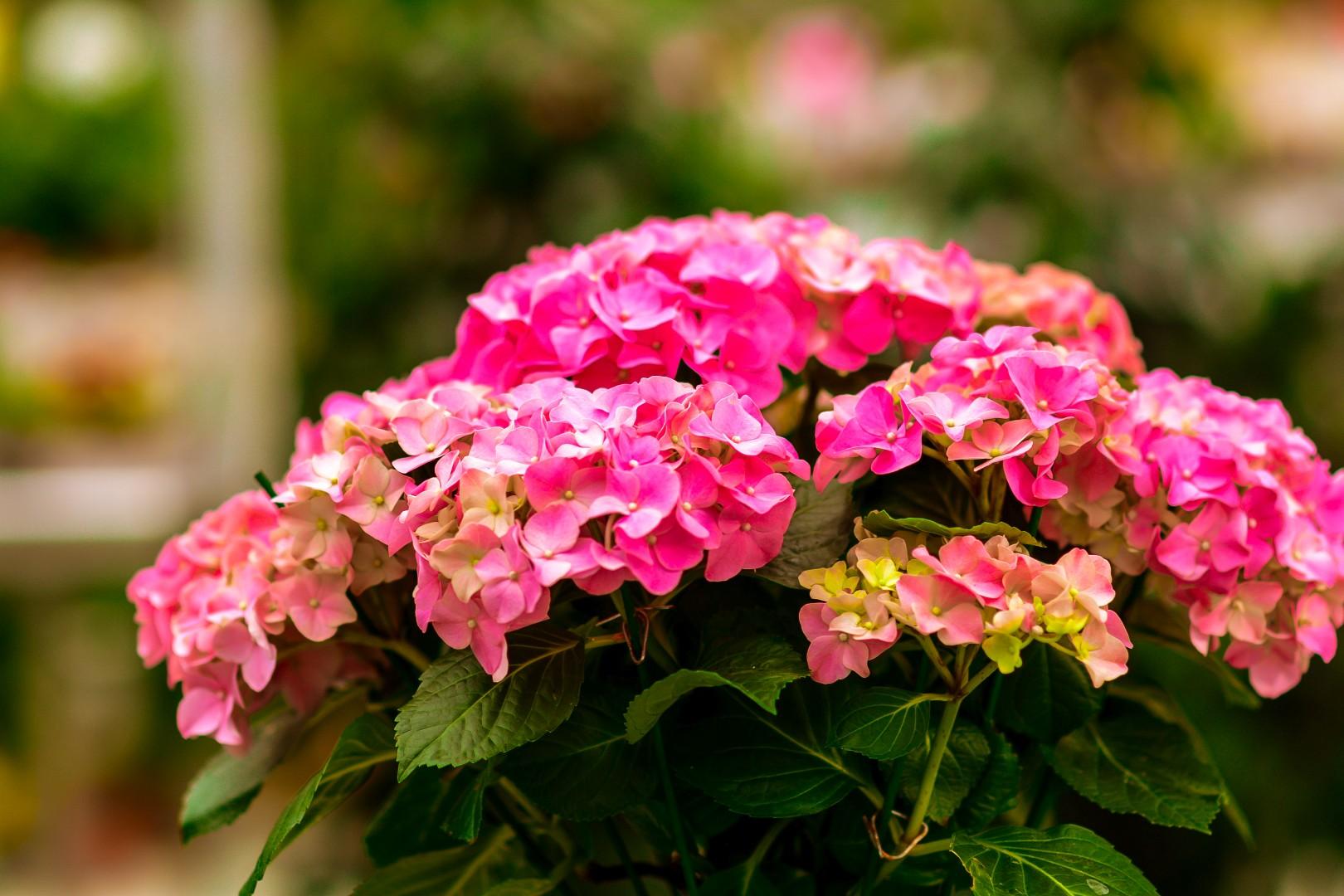 gardenshop-constanta.ro -s2 039