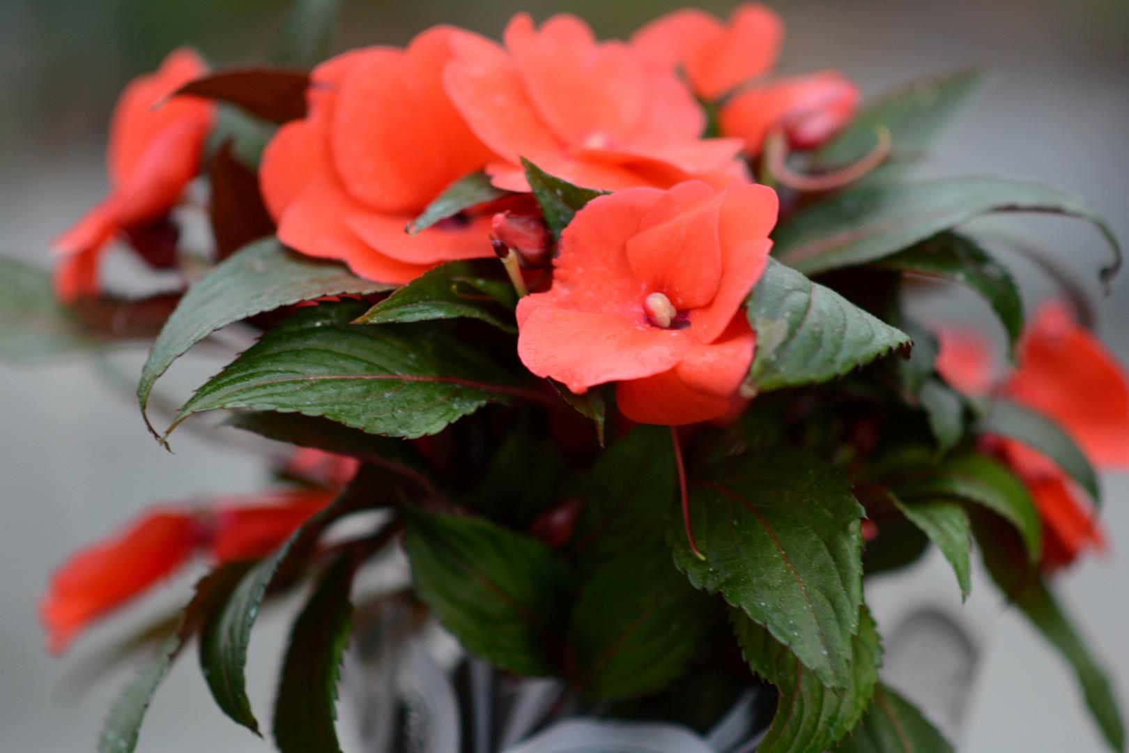 gardenshop-constanta.ro -s2 040