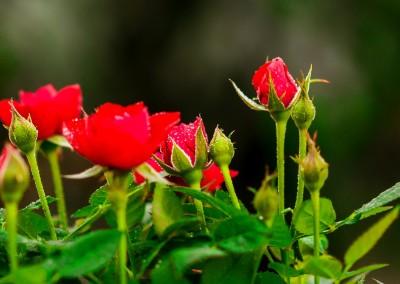 gardenshop-constanta.ro -s2 041